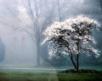 Morning Stillness Poster by Richard Stevens
