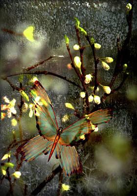 Morning's Moth On Apple Blossom Poster by Li   van Saathoff