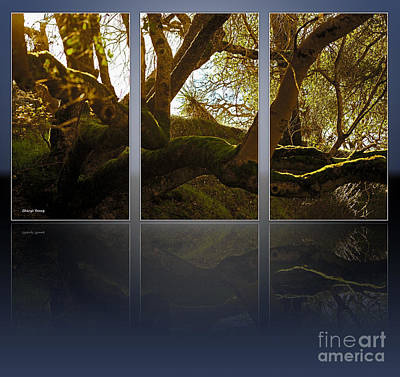 Mossy Tree Triptych 2 Poster by Cheryl Young