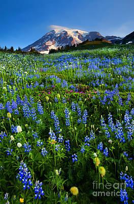 Mountain Garden Poster by Mike  Dawson