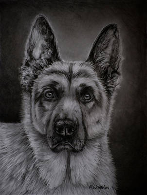 Noble - German Shepherd Dog  Poster by Michelle Wrighton