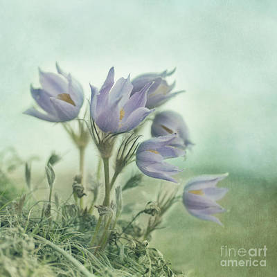 On The Crocus Bluff Poster by Priska Wettstein