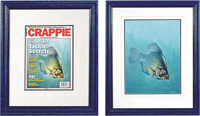 Open Water Crappie Poster by JQ Licensing