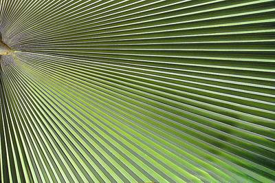 Palm Leaf-2 Poster by Rudy Umans