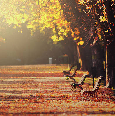 Park Benches In Fall Poster by Julia Davila-Lampe