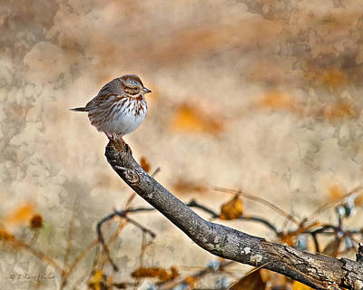 Perched High - Baby Sparrow Poster by J Larry Walker