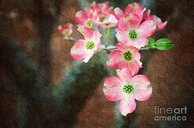 Pink Dogwood Cascade Poster by Andee Design