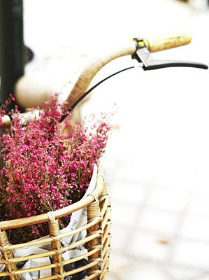 Pink Flowers In Bicycle Basket Poster by Anna Ramon Photography
