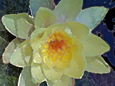 Pond Lily 12 Poster by Pamela Cooper