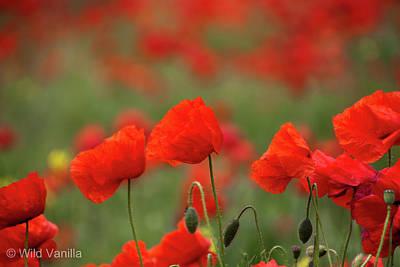 Poppies Poster by Copyright Wild Vanilla