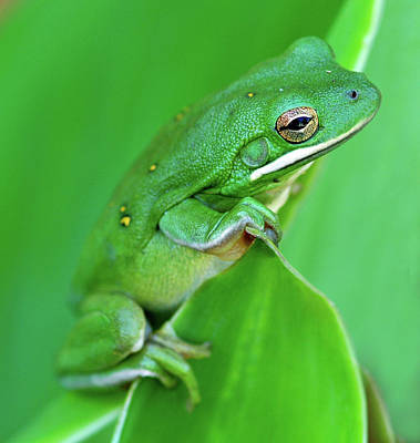 Portrait In Green Poster by Jeff R Clow