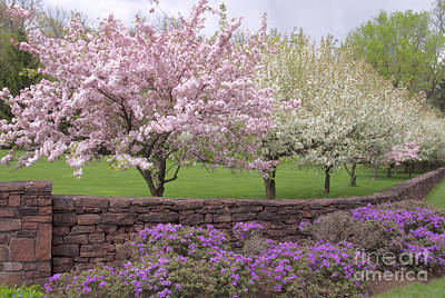 Powder Hill Blossoms Poster by Cindy Lee Longhini