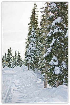 Powdery Snow Path Poster by Lisa  Spencer