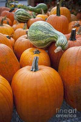 Pumpkins For Sale Poster by Thom Gourley/Flatbread Images, LLC