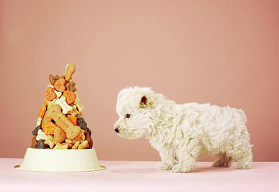 Puppy Looking At Pile Of Biscuits In Dog Bowl Poster by Martin Poole