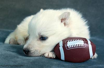 Puppy With Football Poster by Tyra  OBryant