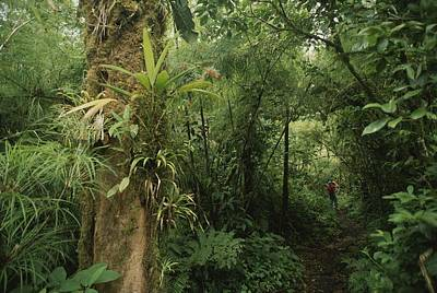 Rain Forest Tree With Bromeliad Plants Poster by Michael Melford