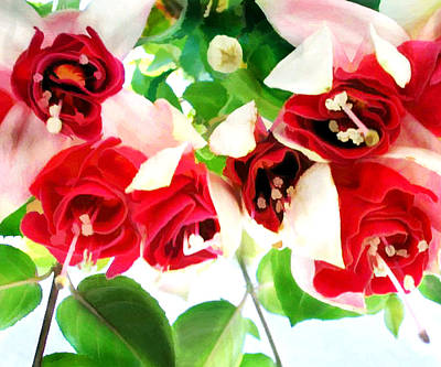 Red And White Fuschias Poster by Elaine Plesser