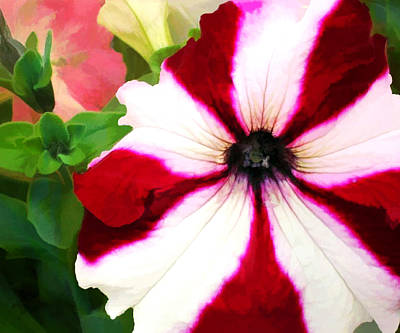 Red And White Petunia Poster by Elaine Plesser