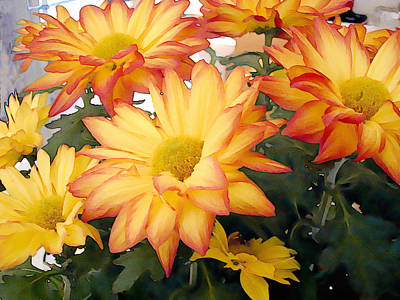 Red Edged Golden Mums Poster by Elaine Plesser