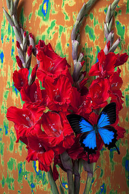 Red Gladiolus And Blue Butterfly Poster by Garry Gay