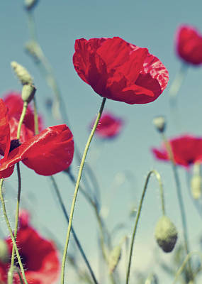 Red Poppies Against Blue Sky Poster by SVGiles
