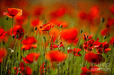 Red Poppy Flowers 02 Poster by Nailia Schwarz