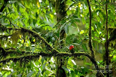 Red Tropical Bird Poster by Matt Tilghman