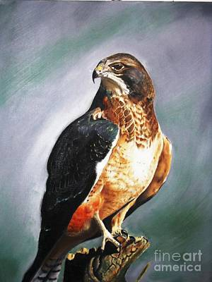 Redtail Hawk  Poster by John  Tukey