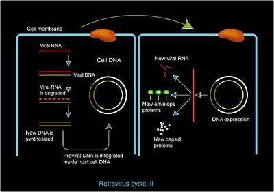 Retrovirus Genome Replication, Artwork Poster by Francis Leroy, Biocosmos