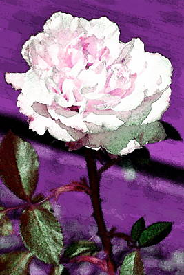 Rose 108 Poster by Pamela Cooper