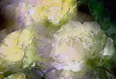 Rose 151 Poster by Pamela Cooper