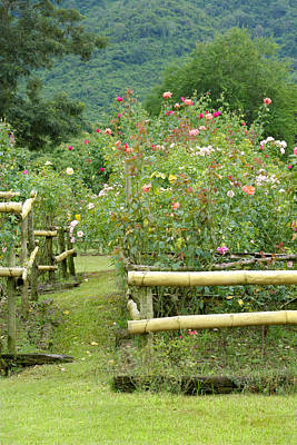 Rose Garden Poster by Atiketta Sangasaeng