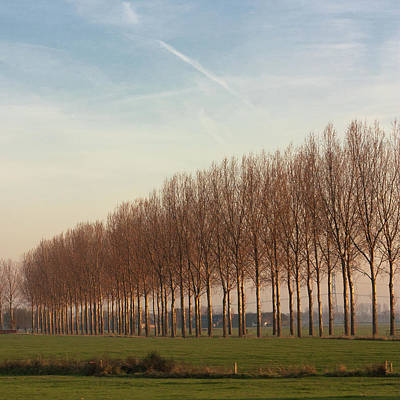 Row Of Trees Against Blue Sky Poster by Leentje photography by Helaine Weide