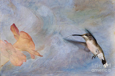 Ruby Throated Hummingbird 2 Poster by Betty LaRue