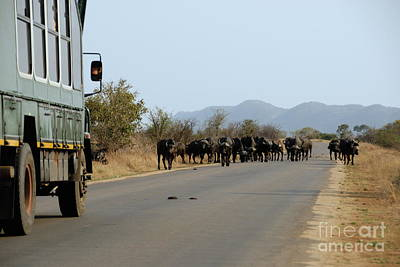 Safari Truck Stopped By A Herd Of African Buffaloes Poster by Sami Sarkis