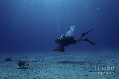 Scuba Diver Follows A Stingray Poster by Terry Moore