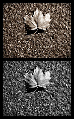Seasons Of Change Poster by Luke Moore
