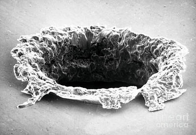 Sem Of Impact Crater On Solar Maximum Poster by NASA / Science Source