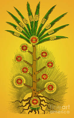 Sephirothic Tree Poster by Photo Researchers