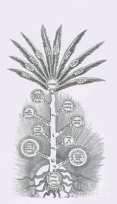 Sephirothic Tree Poster by Science Source