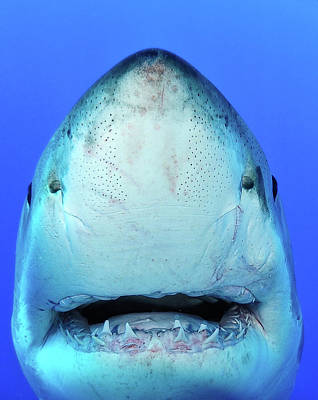 Shark Poster by Don Carpenter of eurisko Photography