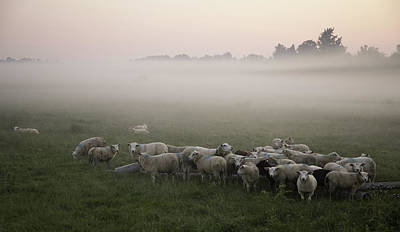 Sheep And Morning Fog Poster by Hjbh
