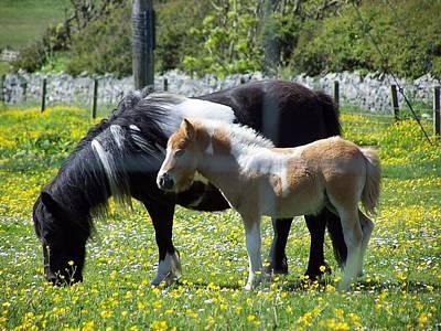Shetland Ponies Poster by George Leask