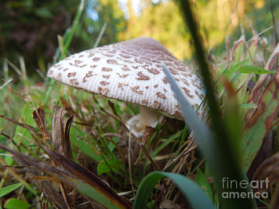 Shroom Among The Grass Poster by Linda Seacord