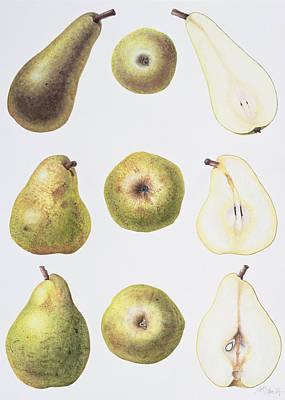 Six Pears Poster by Margaret Ann Eden