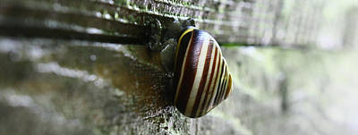 Snail Poster by Photography Art