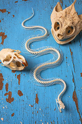 Fangs Poster featuring the photograph Snake Skeleton And Animal Skulls by Garry Gay