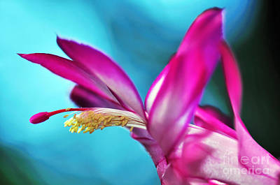 Soft And Delicate Cactus Bloom 3 Poster by Kaye Menner