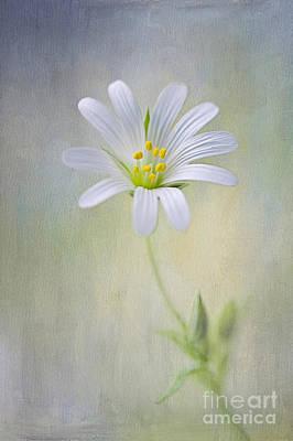 Spirit Of Spring Poster by Jacky Parker